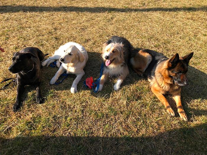 addestrare-cuccioli-como
